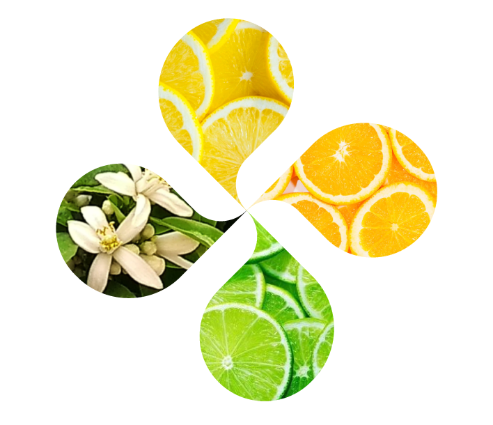 Worldwide experts in citrus flavors